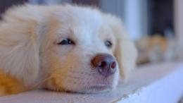 Un chien intelligent qui se repose