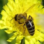 Loi sur la Biodiversité : L'Assemblée nationale pour l'interdiction des néonicotinoïdes