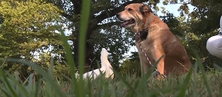 Le canard et le chien